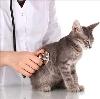 Ветеринарные клиники в Давлеканово
